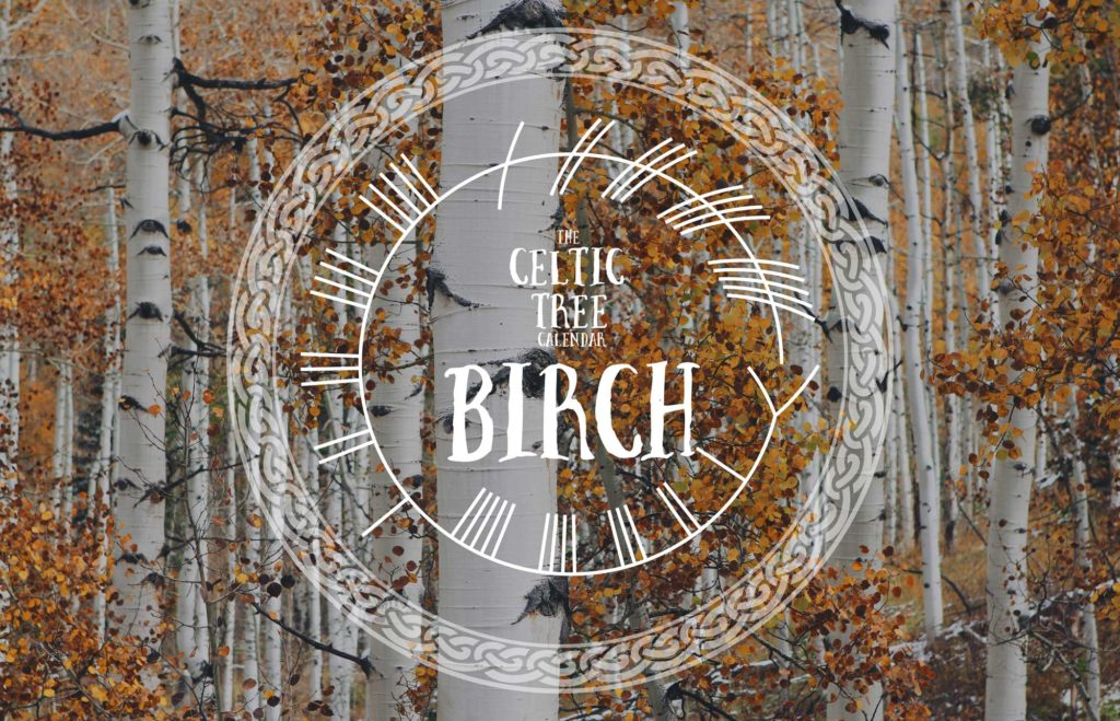 birch-tree-Celtic Tree