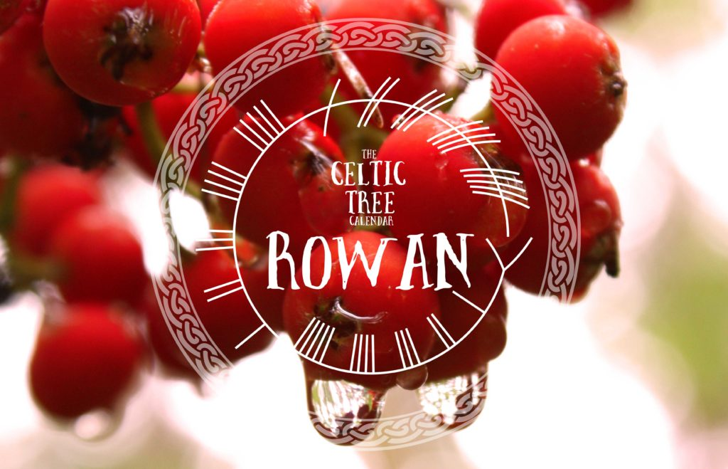 Rowan Celtic Tree