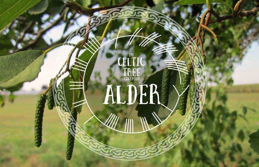 Alder Tree Celtic