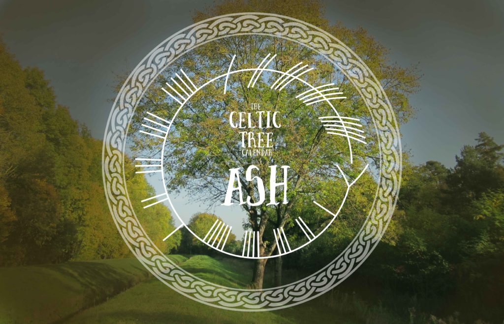 Ash, Celtic, Tree