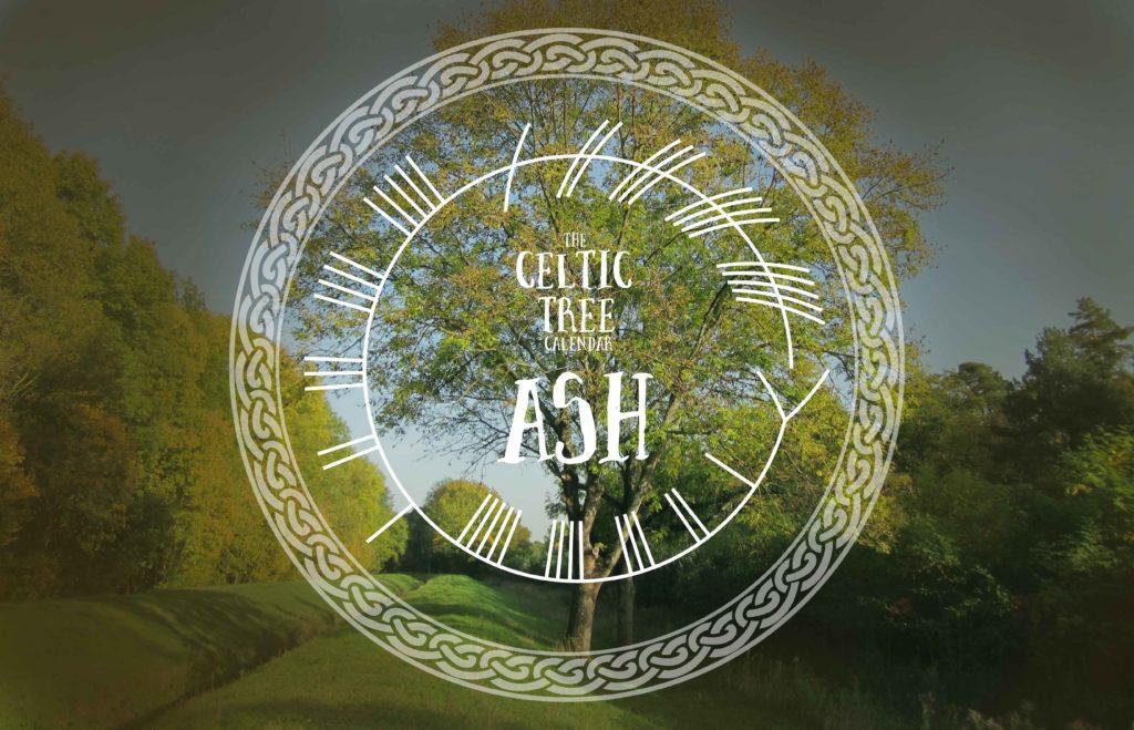 Ash, Celtic, Tree