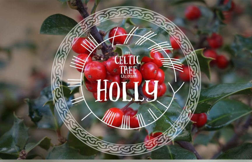 Holly Celtic Tree Calendar