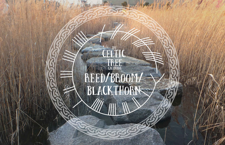 Reed Celtic Tree Calendar