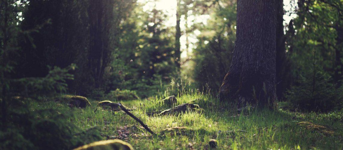 Shamanism, Shamanic, Forest