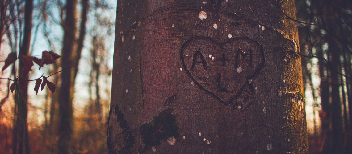 Love, Heart, tree, relationship