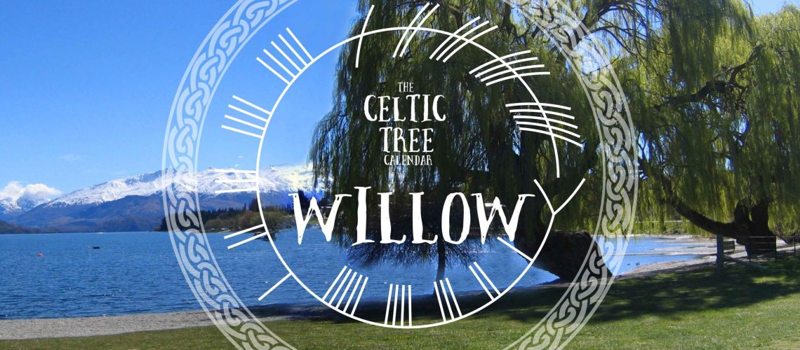 Willow Celtic Tree Ogham