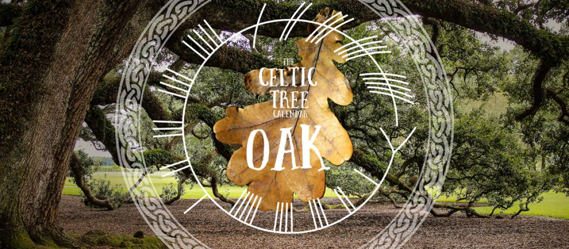 Oak, Tree, Celtic